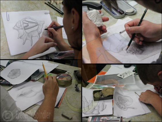 Scientific drawing course