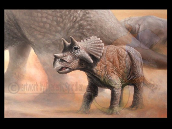 *Triceratops* baby
