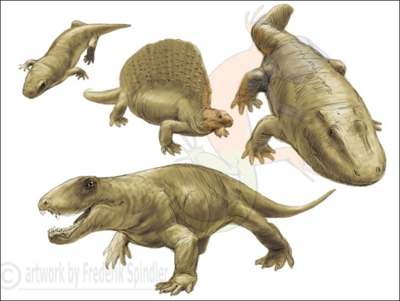 early tetrapods