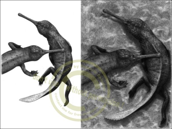 *Champsosaurus* sp.